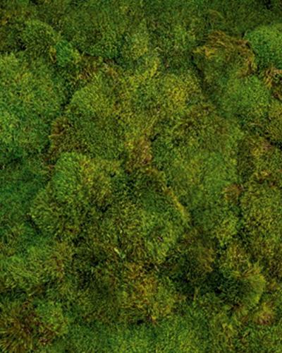 Environmental-Moss